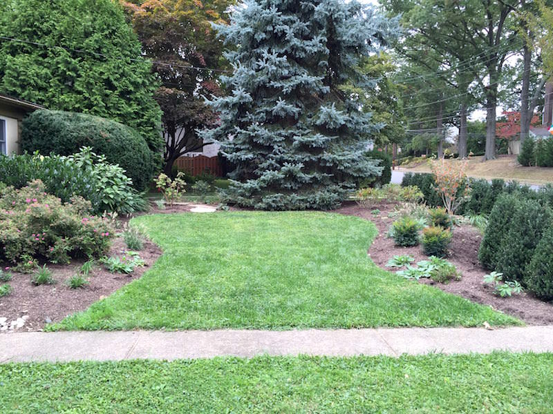 new landscape for front lawn