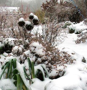 January Garden Tips 2