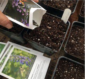 January Garden Tips 6