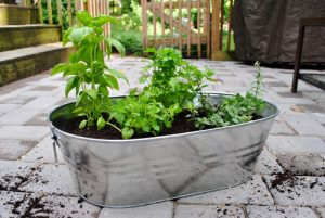 Herb Garden Basics 2