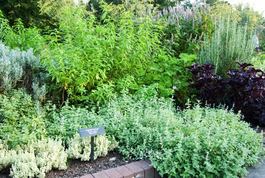 Herb Garden Basics