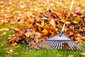 fall leaves & a rake on the ground