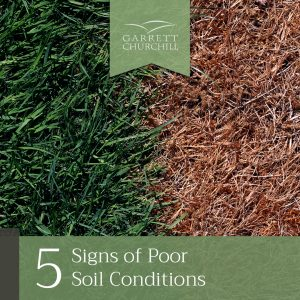 Read more about the article 5 Signs of Poor Soil Conditions